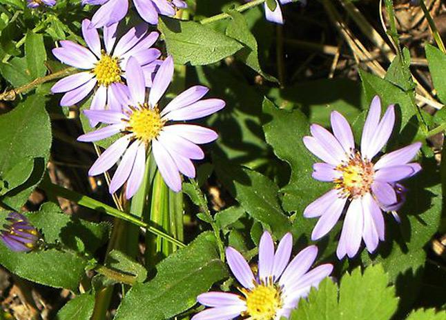 chimneyrock_flora5