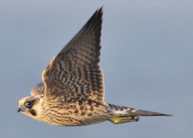 chimneyrock_birds