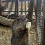 14th Annual Groundhog Day Celebration